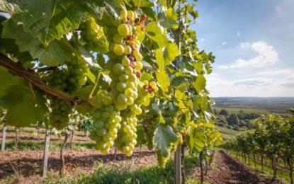 Tollo: Radica punta sull'agricoltura di precisione