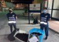 Nuovo colpo Capitaneria di Porto: sequestrati oltre 2000 ricci