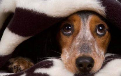 Francavilla, il Movimento Animalista attacca Luciani sui fuochi